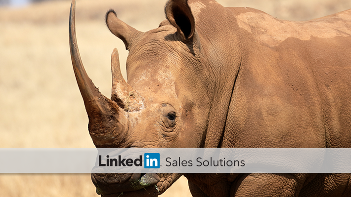 Convert-Rhinos-into-Social-Sellers