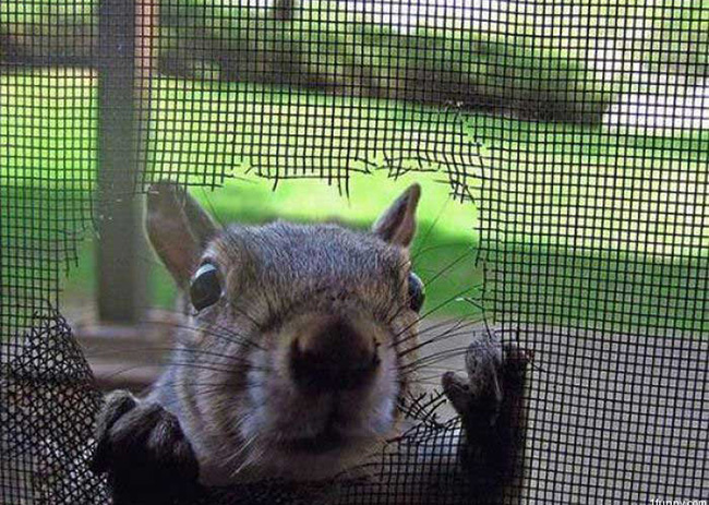 screen-door-squirrel